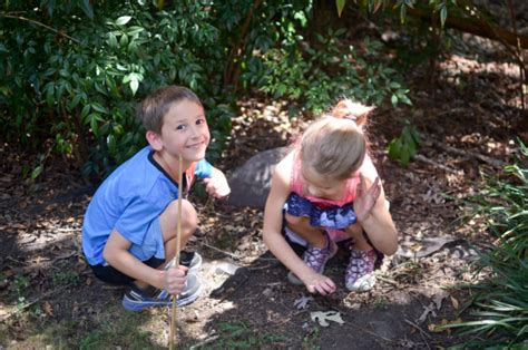 how to catch a toad in your backyard exploring habitats in your backyard only passionate