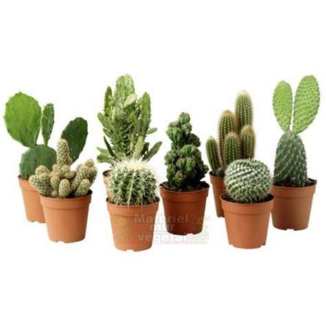 Incroyable Mur Vegetal Interieur Pas Cher #2: cactus-en-pot-o6cm.jpg