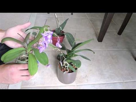 orchid flower spike updates to repot or not youtube