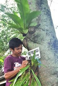 Bibit Anggrek Spesies info pameran anggrek about orchids and inos kalsel