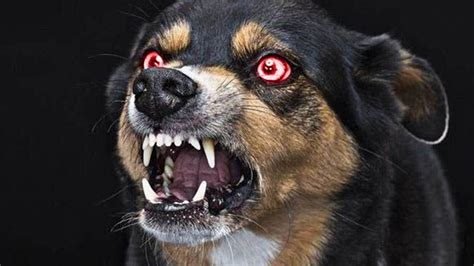 dogs in danger 10 of the most dangerous dogs in the world