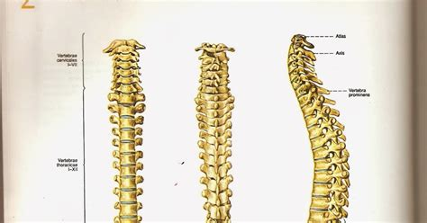 format askep jiwa asuhan keperawatan lengkap tulang punggung darsum