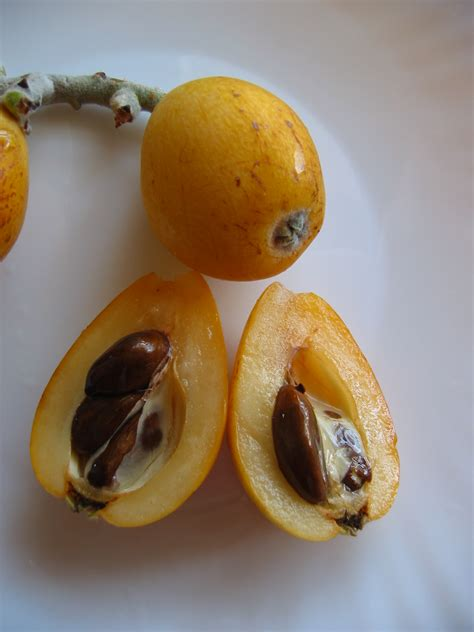 3 fruits with seeds on outside maintenant la vie 224 l 238 le maurice fruit and vegetable