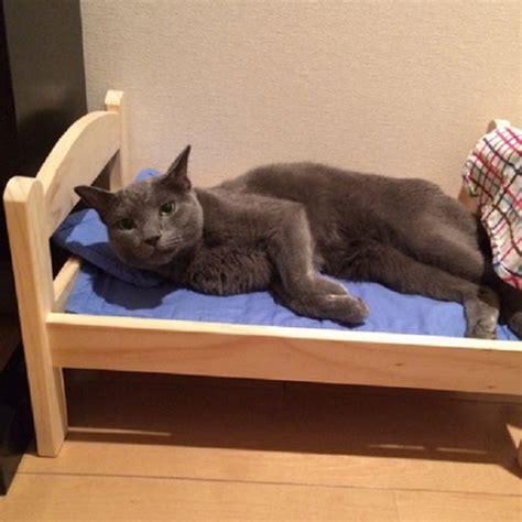 Lettini Per Gatti Ikea ikea dona lettini per bambole ai gatti di un rifugio per