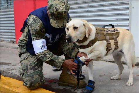 frida rescue meet frida the rescue who already saved 52 from disasters including the