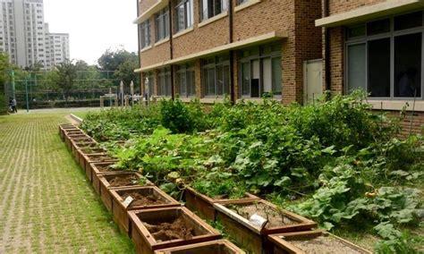 learn  school gardens tips  making  school