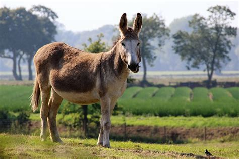 Burro Animal by 2017 Animal Pictures Free Photos Wallpapers