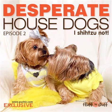 desperate house dogs desperate house dogs the new sitcom ish drama blog series