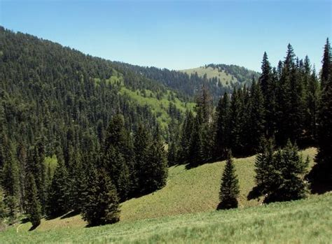 lincoln national forrest lincoln national forest ruidoso nm on tripadvisor
