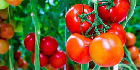 Dupont Lannate 25 Wp Insektisida parassiti dello zucchino dupont lannate 174 25 wp italia dupont italia