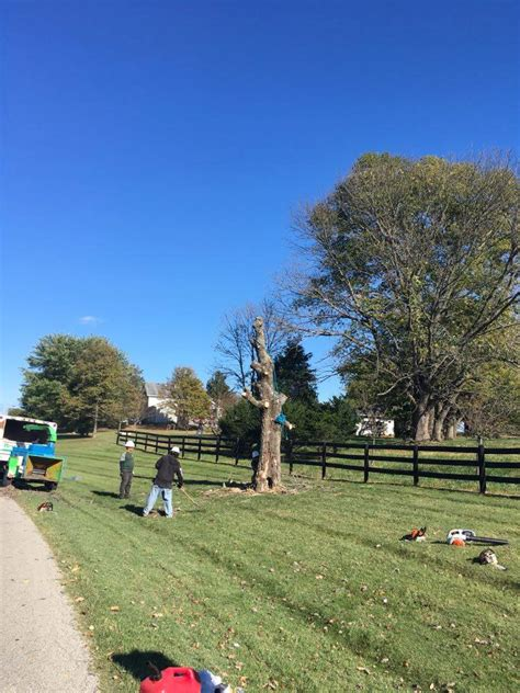 service louisville ky fence line tree removal louisville ky mario s tree care 502 804 2822