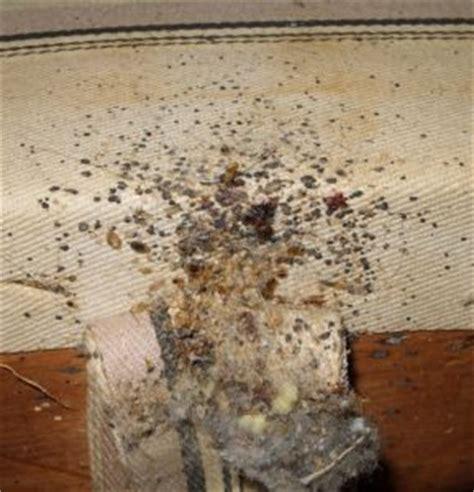bed bug bites  flea bites   identify  treat