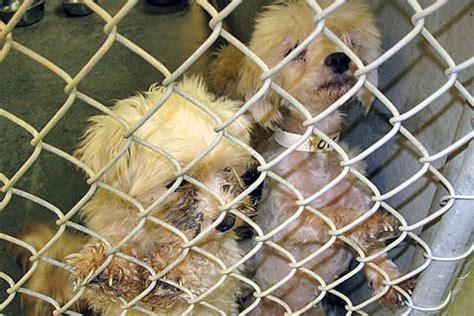 pug rescue richmond va teamwork to the rescue 183 a humane nation