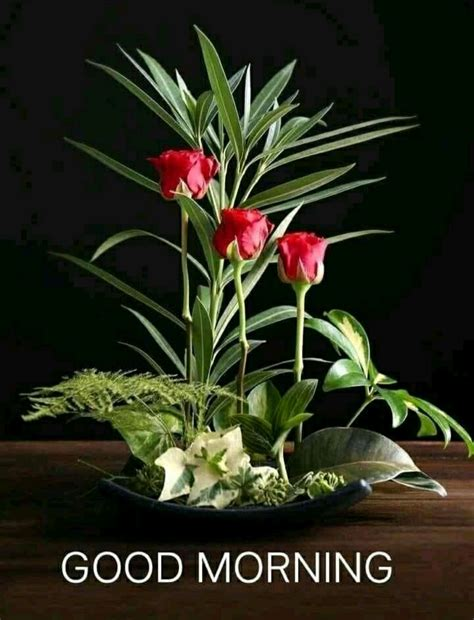 good morning images  flowers hd