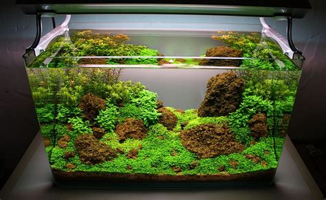 cara design aquascape naturesoil step by step layout nr 3 by oliver knott 2