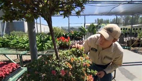 disneyland horticulture cast member profile the disney blog