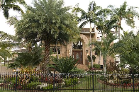 florida landscape with tropical palm trees in sarasota