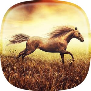 girly horse wallpaper cute girly m pictures apk fast download free download