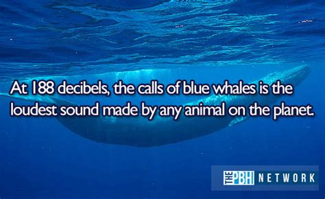 animals facts 10 amazing things about marine