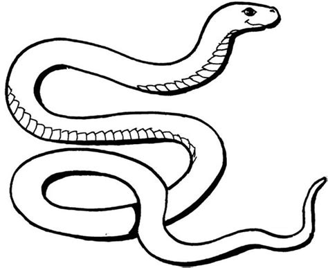 free coloring page of a snake free snake colouring pages for kids to download