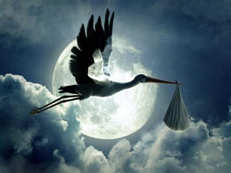 stork archives pregnancy help information center