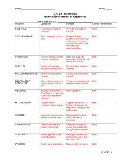 Cell Organelle Worksheet Answers by Chapter 3 Worksheet Reading Guide The Cell