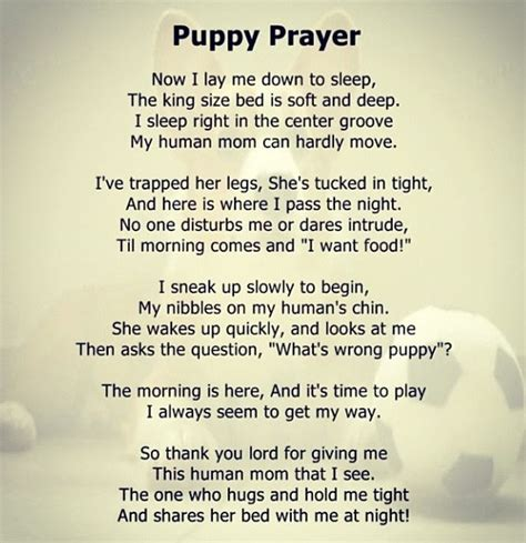 puppy prayers puppies prayer the pets puppys and prayer