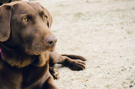 perro de ojos verdes descargar fotos gratis