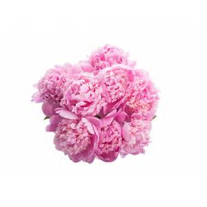 pink peonies hot pink peony bouquet flower muse