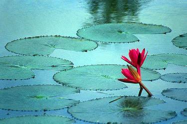 imagenes de tranquilidad reflexivas coordinacion academica disfrutando de la tranquilidad