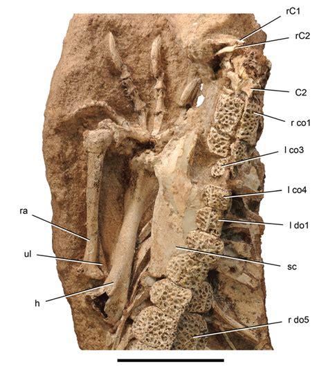 Minor Defect Fossil Ellis Medium Discoveries Paul Sereno Paleontologist The