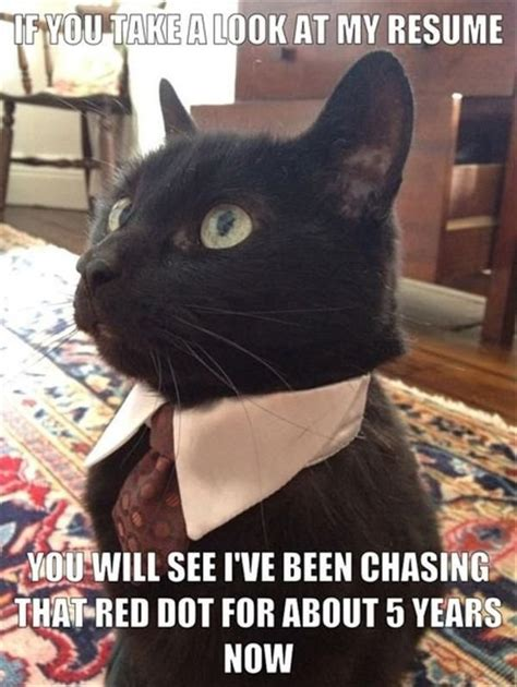 gather  marvelous  love    funny cat memes