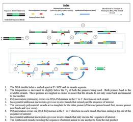 pcr test polymerase chain reaction