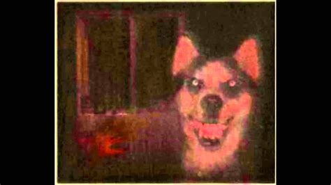 creepy dogs scary smile www pixshark images galleries with a bite