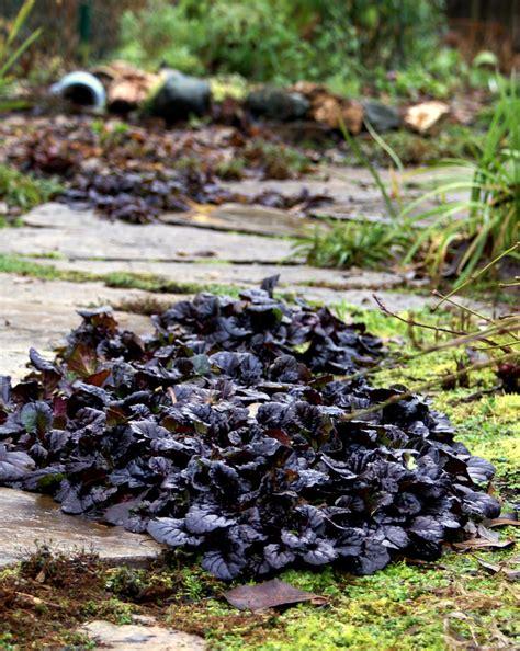 adding black plants to your garden crasstalk