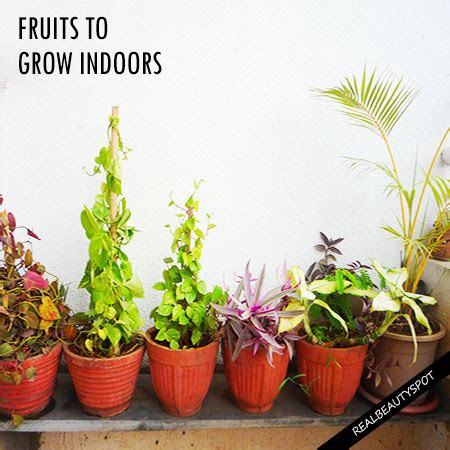 best flowers to grow indoors best fruits to grow indoors