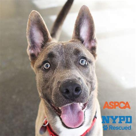 aspca dogs for adoption adoptable dogs aspca