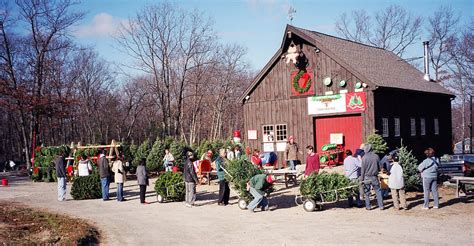 images of massachusetts christmas tree association