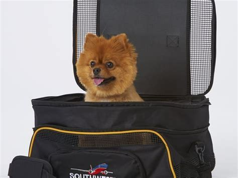 southwest airlines dogs pet travel policies for top u s airlines