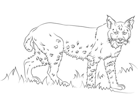 bobcat coloring page bobcat logo coloring pages coloring pages