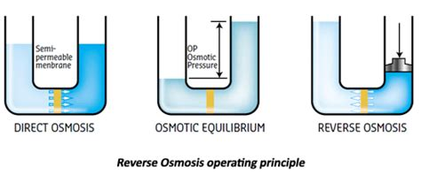 what is osmosis and why should i care express