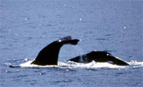 dominica whale & dolphin watching excursion reviews