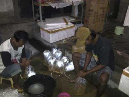 Bibit Gurame Padang telor bibit gurame murah budidaya ikan air tawar