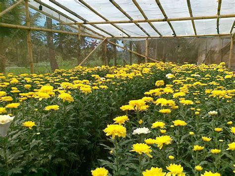 taman bunga mini check out taman bunga mini cntravel