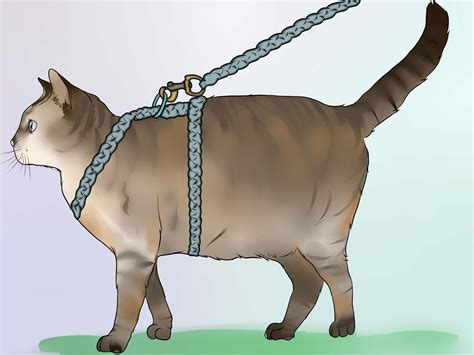 how to do a cat how to make a harness for your cat with pictures