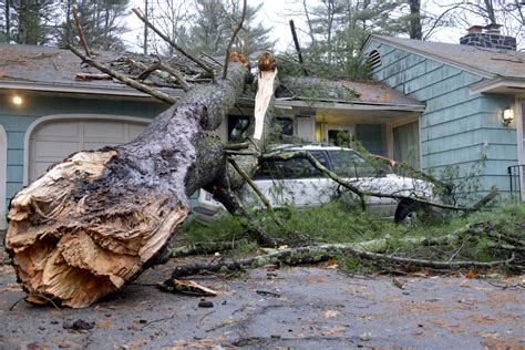 tree falls on house insurance coverage is your tree a liability inexpensive tree care