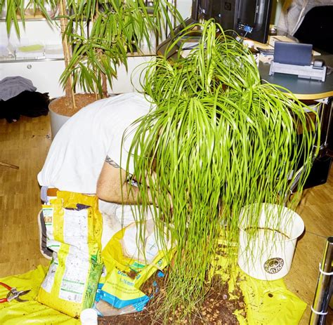 Was Machen Gegen Pilze Im Garten by Was Tun Gegen L 228 Use Mehltau Pilze Der Pflanzendoktor