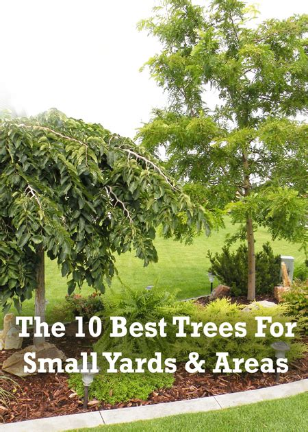 Small Backyard Trees by Triyae Trees For Yards Various Design