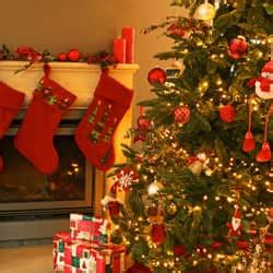 do real christmas trees have bugs don t get bed bugs for