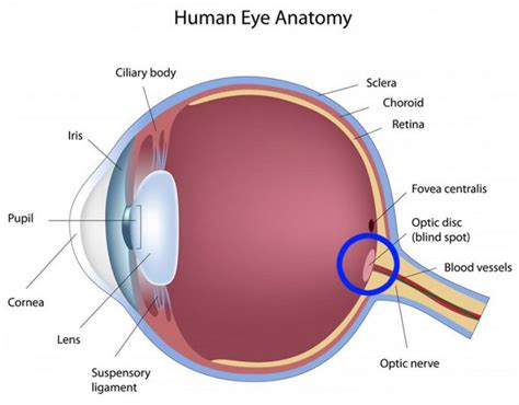 Why Do We A Blind Spot In Your Eye blind spots in personal growth